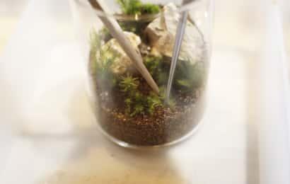はしで苔を抑えながら植え付けている様子