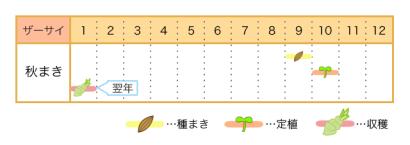 ザーサイの栽培カレンダー