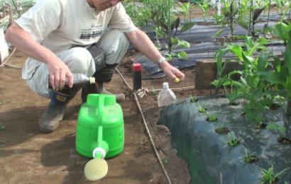 ジョウロの中で液肥を水で薄める