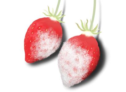 うどんこ病におかされたイチゴの果実