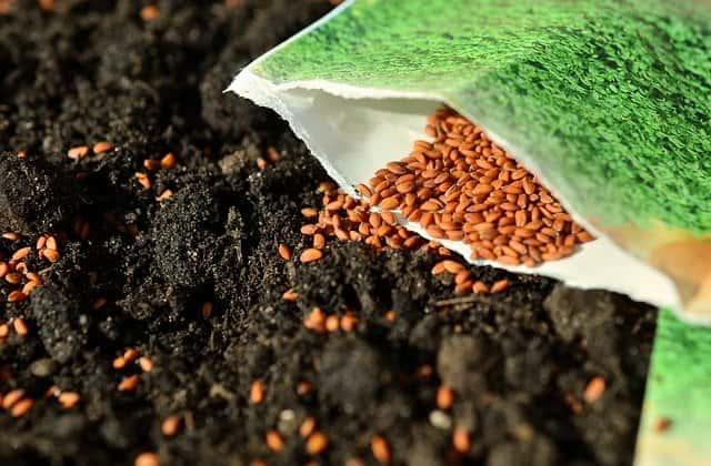 ガーデニング 種子