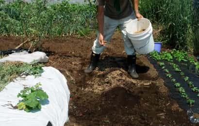 チンゲンサイ畑の土作り