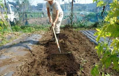 ダイコンの土作り