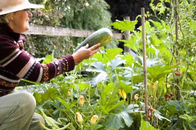 ヘチマを収穫する女性