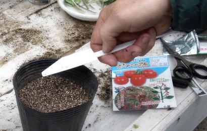 種まき機でポットにミニトマトの種をまく