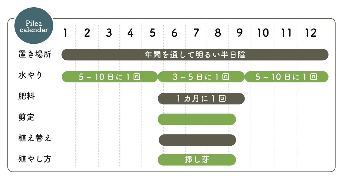 ピレア 栽培カレンダー