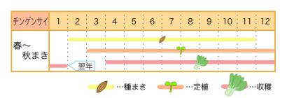 家庭菜園カレンダー チンゲンサイ