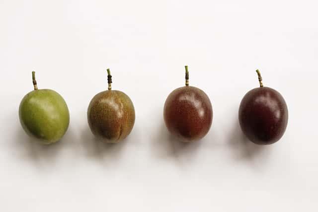 パッションフルーツの熟す度合いの比較
