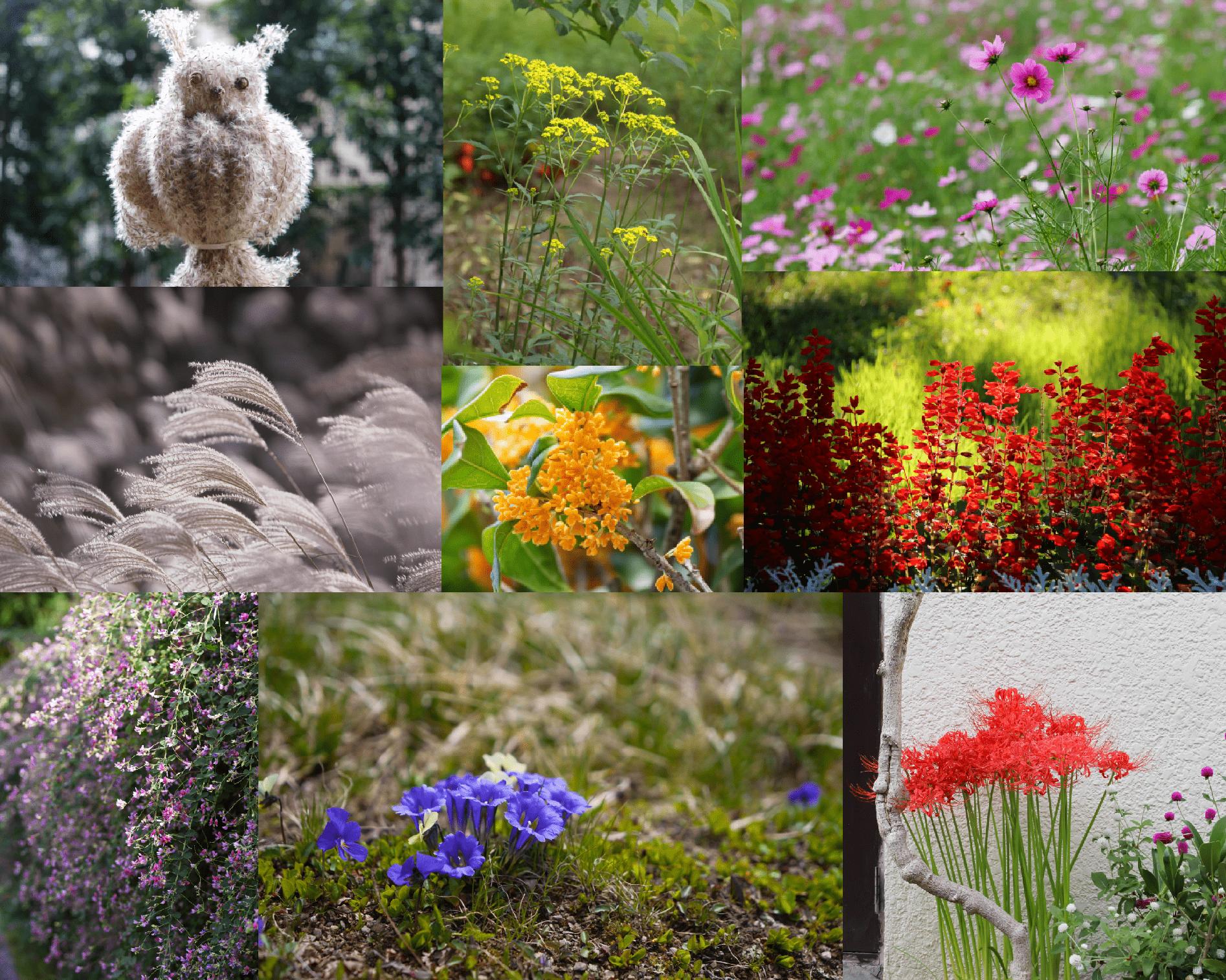 いろいろな秋の花