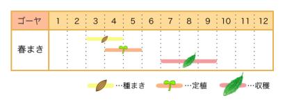 家庭菜園カレンダー ゴーヤ