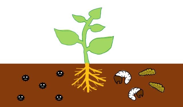 土壌にいる病原菌や害虫など土壌病害の原因となる病原