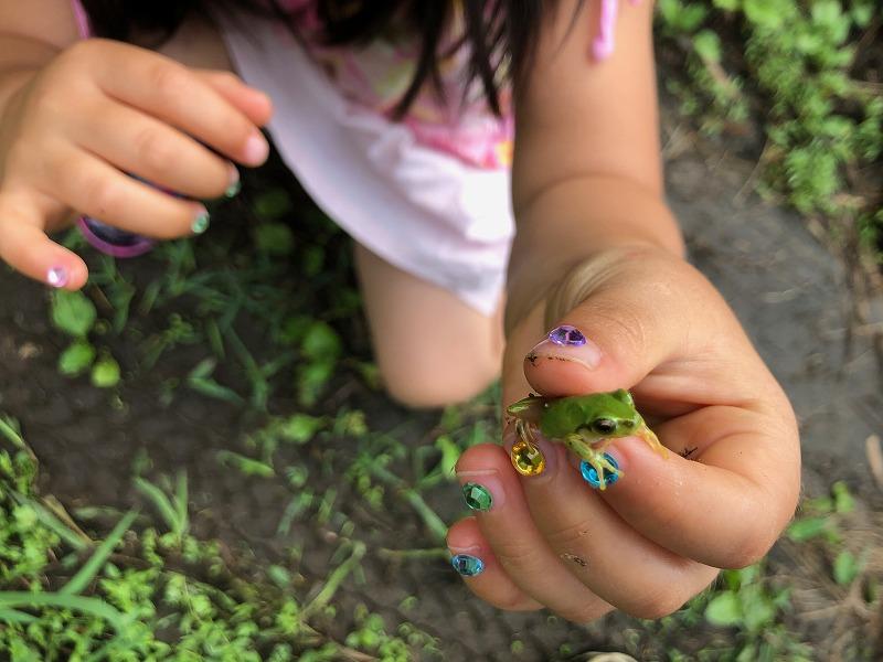 キラキラの爪でカエルをつかむ女の子