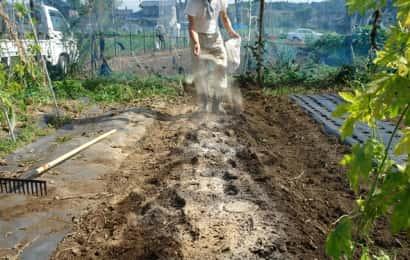 芽キャベツ畑の土作り