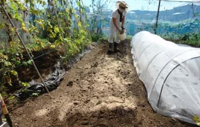 カラシナ栽培の土作り