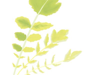 萎黄病におかされたダイコンの茎葉