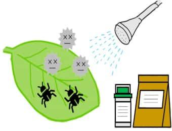 作物の葉に発生している害虫と病原菌に殺虫殺菌剤を散布しているイラスト