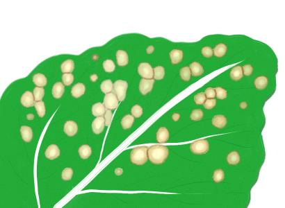 白斑病におかされたハクサイの葉