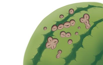 炭疽病におかされたスイカの果実