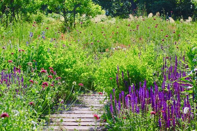 紫色の花が咲く庭