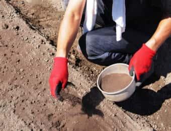畑にぼかし肥料をまく