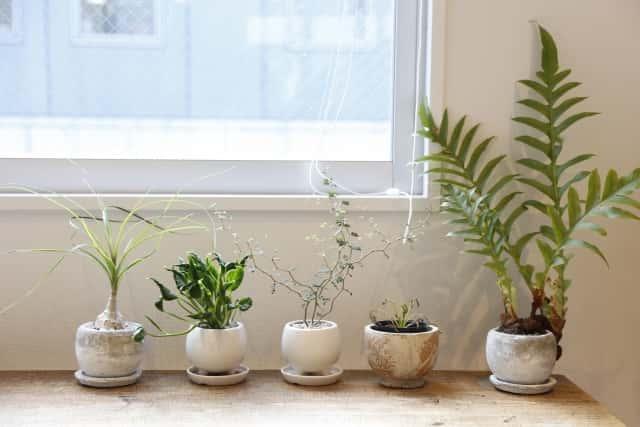 並んだ観葉植物