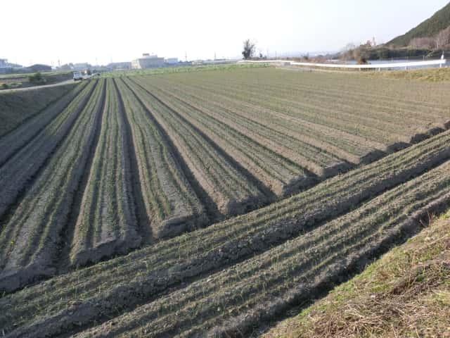 2525ファームの畑