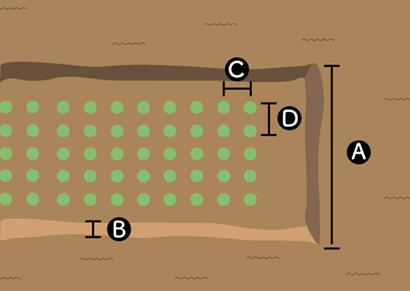ニラの栽培スペース