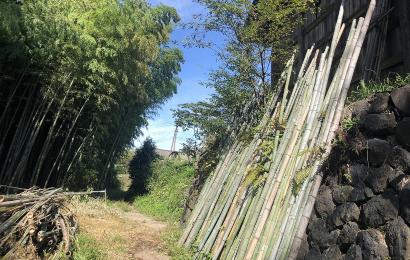 立てかけてある竹