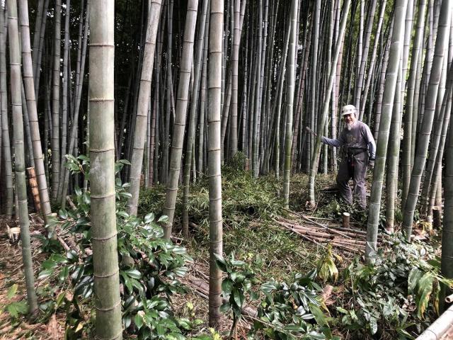 竹林で作業する人