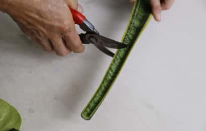 サンセベリアの挿し穂作り