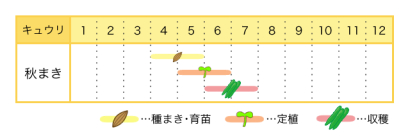 キュウリの栽培時期