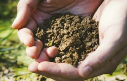 土を持つ手