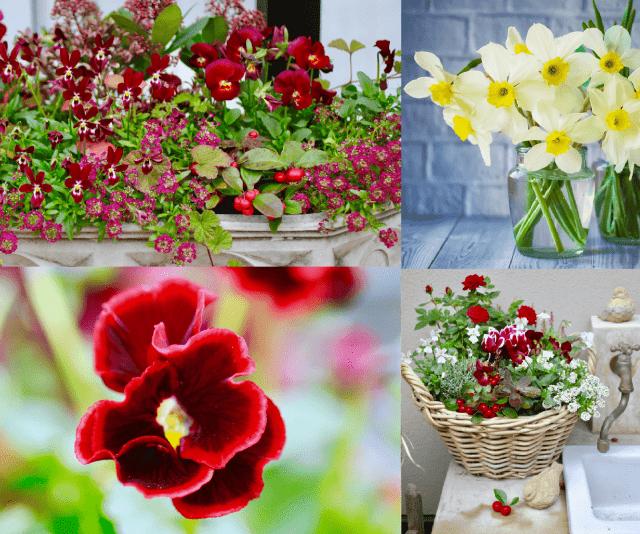 いろいろな冬の花