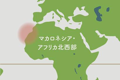 アエオニウム原産地地図