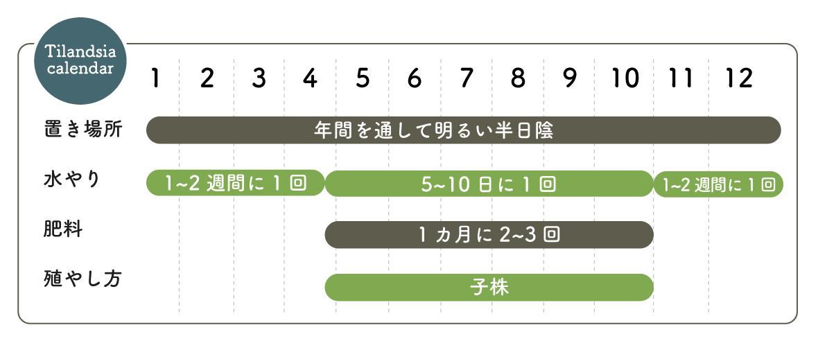 チランジア栽培カレンダー