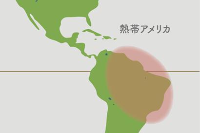 ネオレゲリア原産地地図