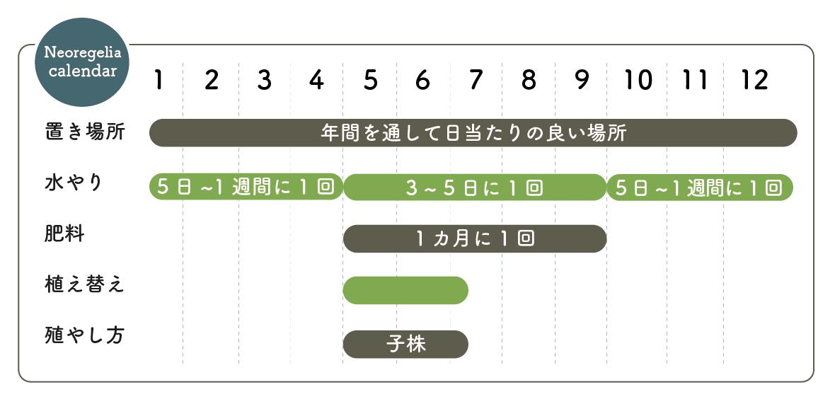 ネオレゲリア栽培カレンダー