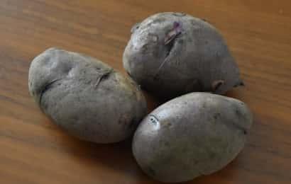 タワラマゼラン(ジャガイモ)