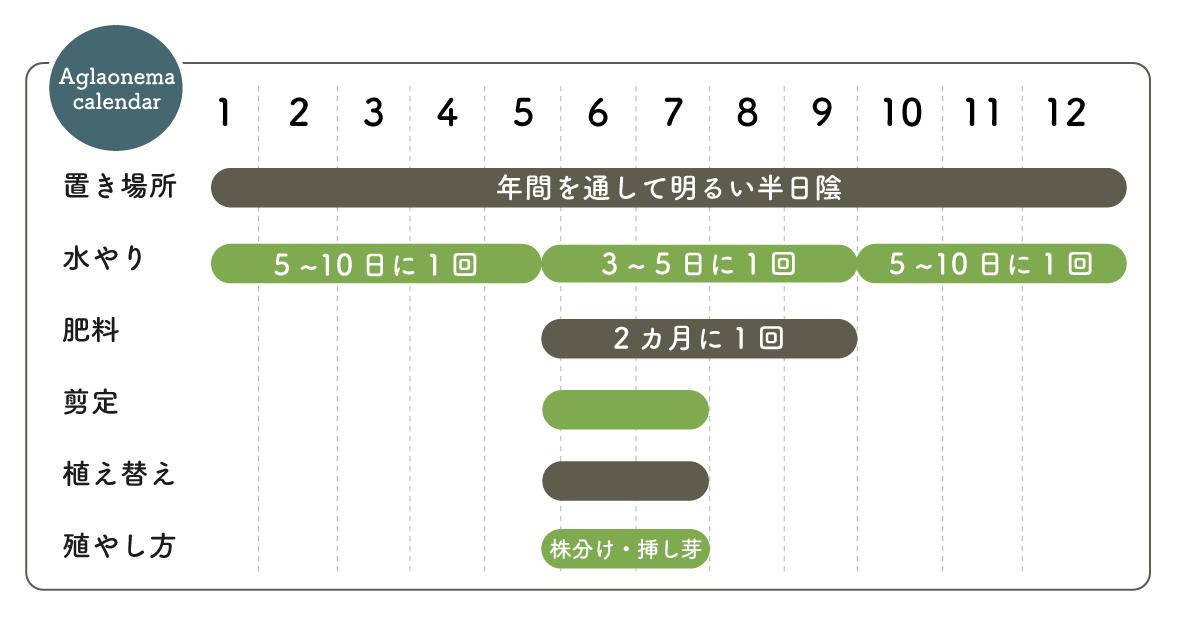 アグラオネマ栽培カレンダー