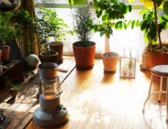 植物のためのストーブ