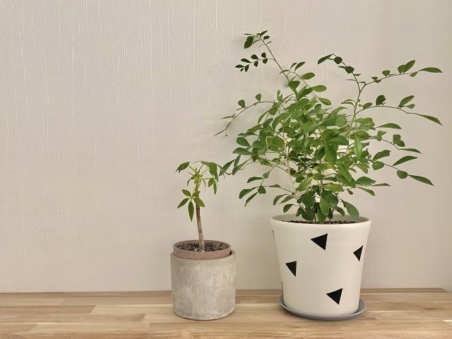 観葉植物の鉢の選び方|おしゃれに見せるコツをプロがアドバイス!おすすめの鉢や鉢カバーも紹介