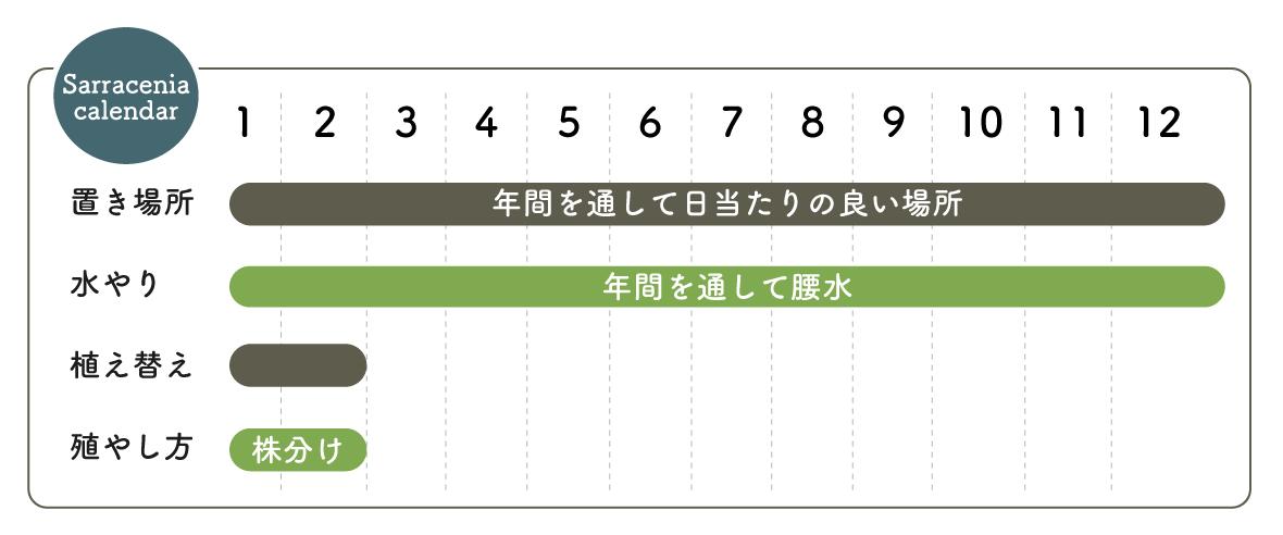 サラセニア栽培カレンダー