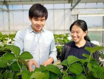 生産効率をアップさせるイチゴ立体栽培の導入を支援!