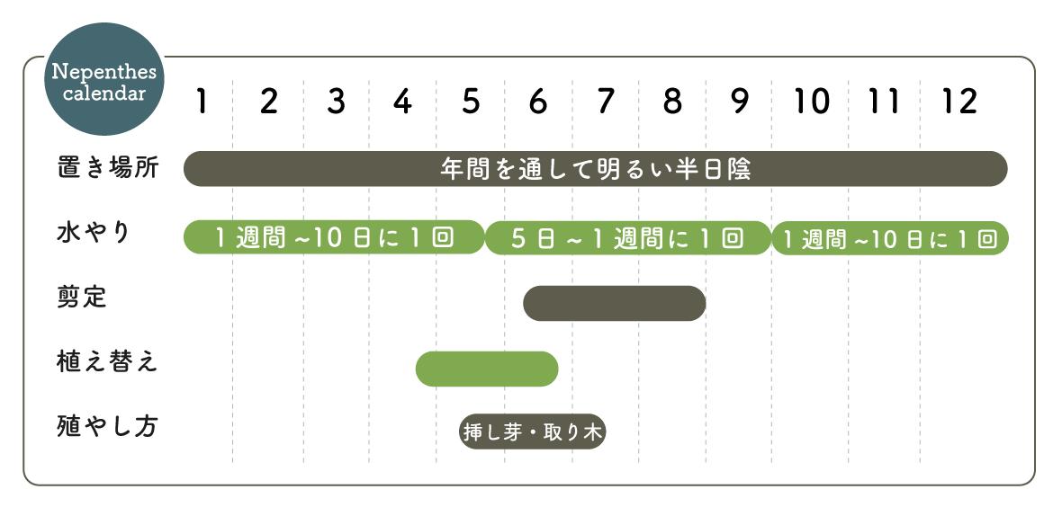 ウツボカズラ栽培カレンダー