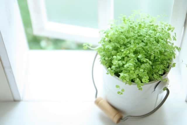 窓枠の植物