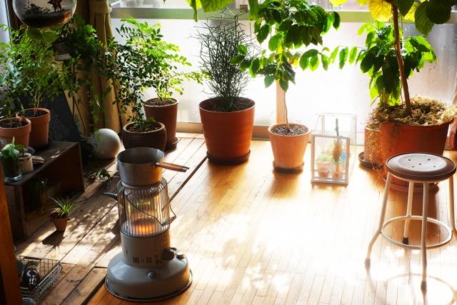 たくさんの観葉植物が置かれた部屋