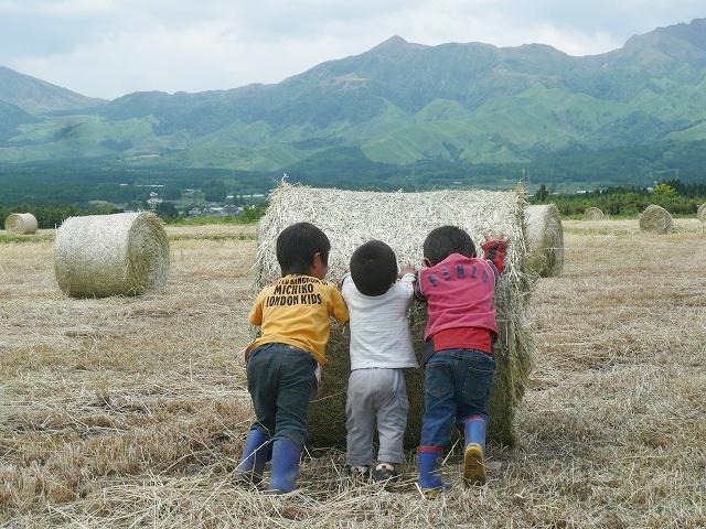 麦稈ロールを押す子どもたち