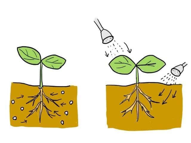 肥料 効き方