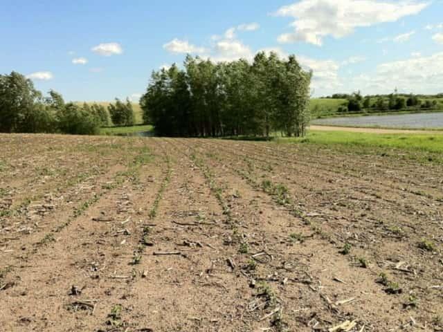 ダイズ栽培の土壌