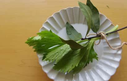 セロリの葉